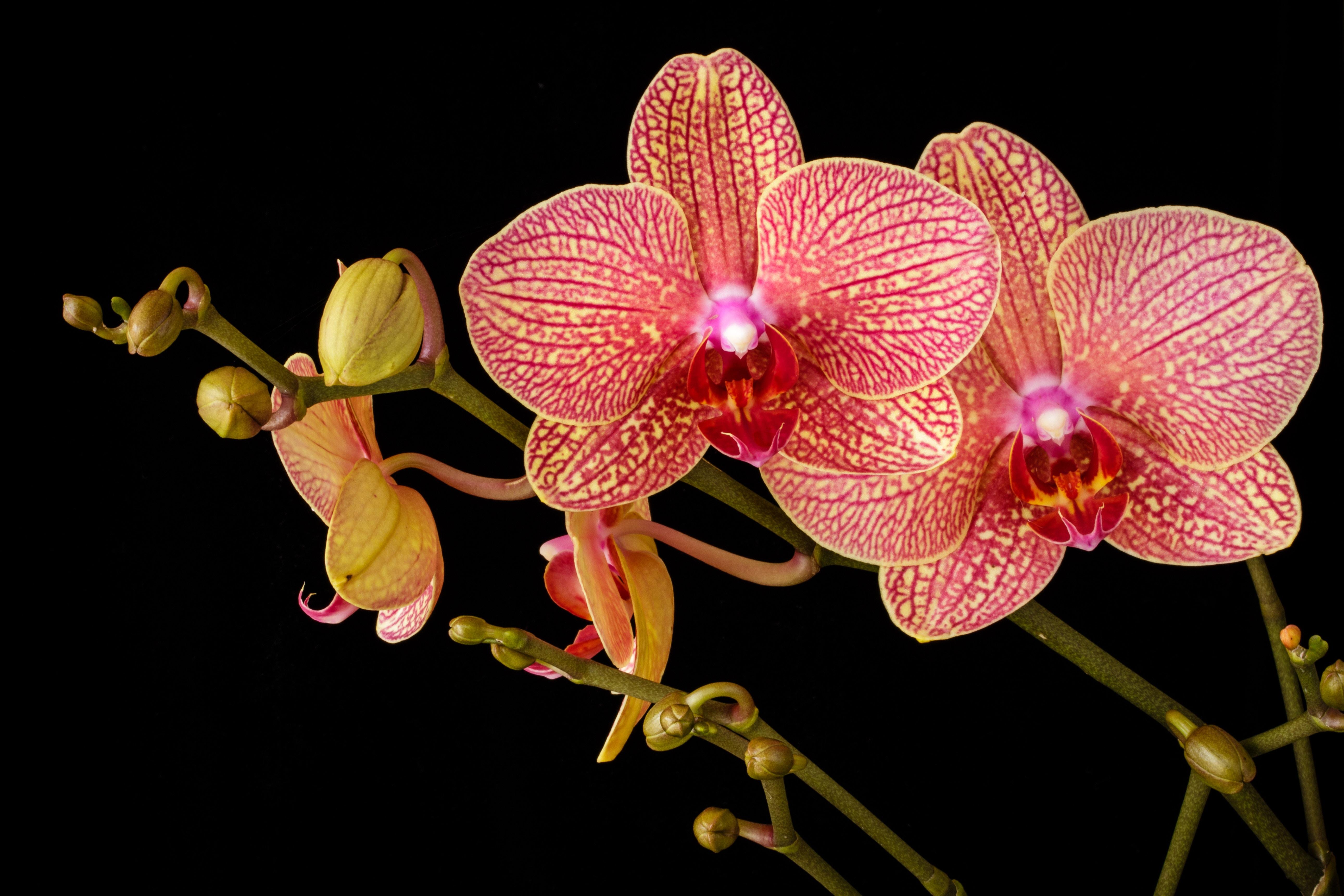 Comment Planter Une Orchidée les conseils pour refleurir une orchidée !