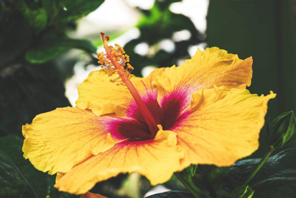 Signification des fleurs : le guide à suivre